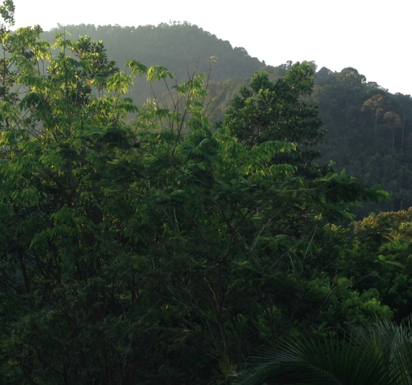 View of the Malaysian jungle
