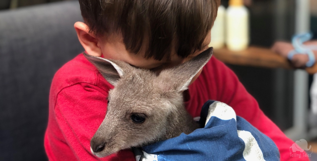 My son falls in love with a rescued joey