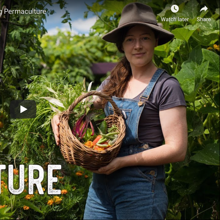 Kat Lavers grows food in a small suburban backyard